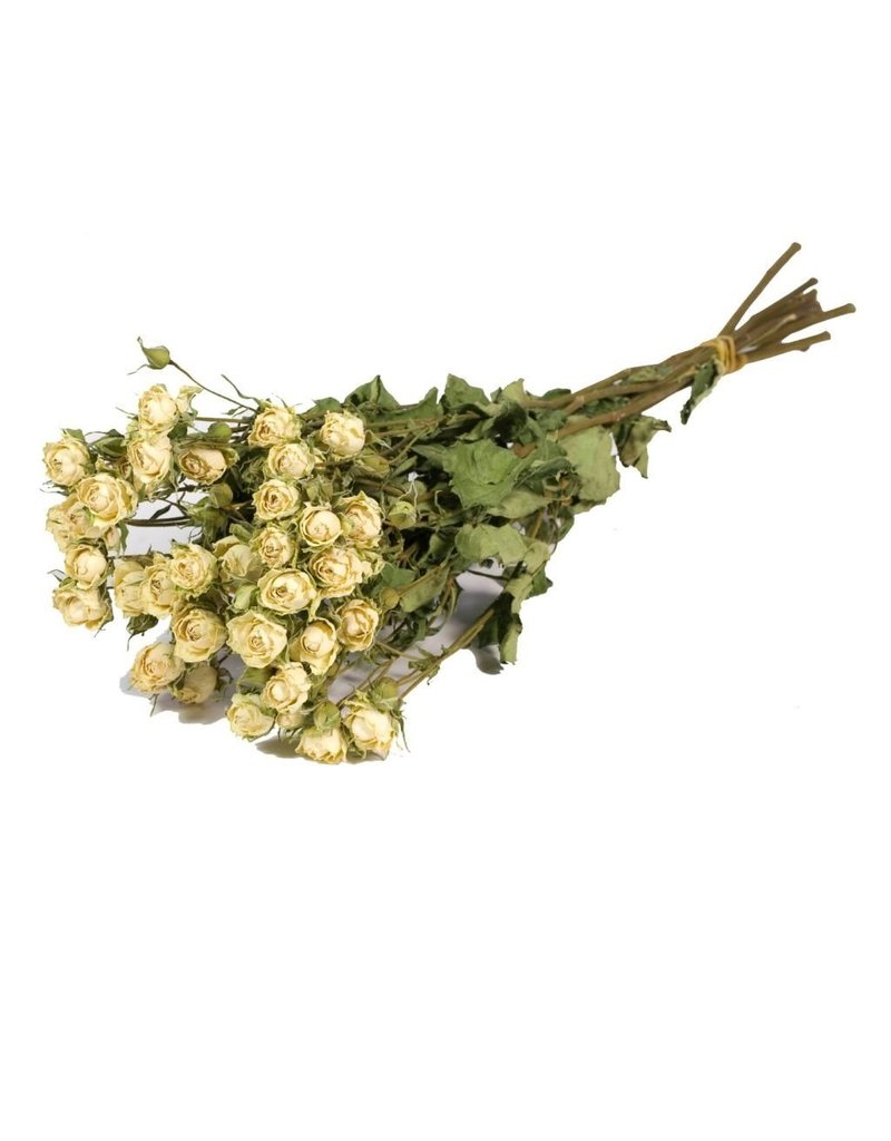 10 dried white roses