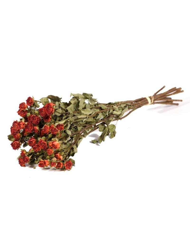 10 dried roses orange