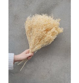 Dried Brooms Natural bleached