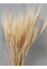 Dried Triticum (wheat) Blond Beard 250 gramm per bunch
