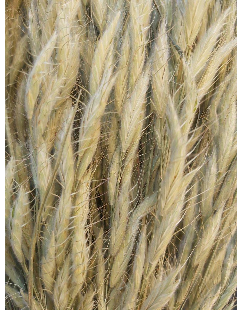 Dried Bromus - soft Dravik