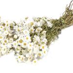 Weißer Rhodante - getrocknet