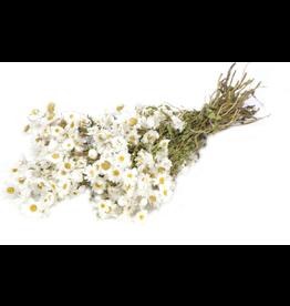 White Rhodante - dried