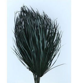 Three dried palm leaves - Chamaerops - black
