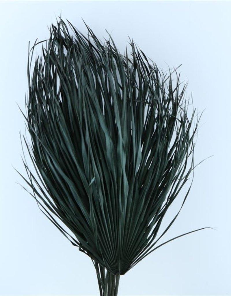 Three dried palm leaves - Chamaerops - black
