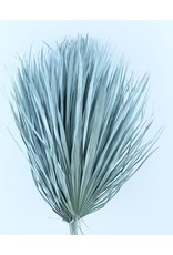 Drei getrocknete Palmblätter - Chamaerops - hellblau
