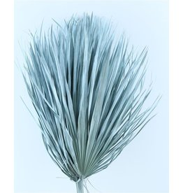 Three dried palm leaves - Chamaerops - light blue