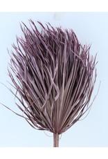Drie gedroogde palmbladeren - Chamaerops - lila