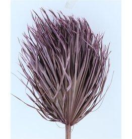 Drei getrocknete Palmblätter - Chamaerops - Flieder