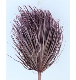 Three dried palm leaves - Chamaerops - lilac