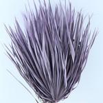 Drie gedroogde palmbladeren - Chamaerops - milka
