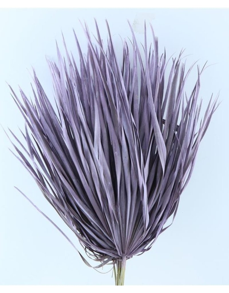 Drei getrocknete Palmblätter - Chamaerops - Milka