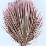 Drie gedroogde palmbladeren - Chamaerops - roze