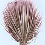 Gedroogde Chamaerops (palmblad) rose
