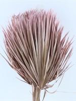Three dried palm leaves - Chamaerops - pink