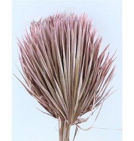 Drei getrocknete Palmblätter - Chamaerops - rosa