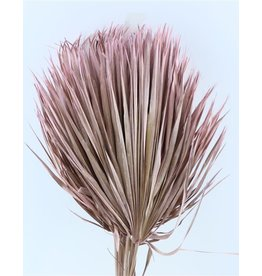 Three dried palm leaves - Chamaerops - pink