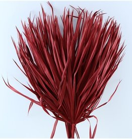 Three dried palm leaves - Chamaerops - red