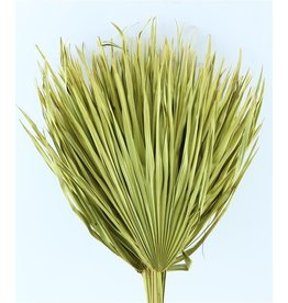 Three dried palm leaves - Chamaerops - yellow