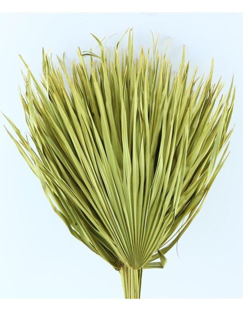 Drie gedroogde palmbladeren - Chamaerops - geel