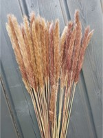 10 x Fluffy Pampas in various colors
