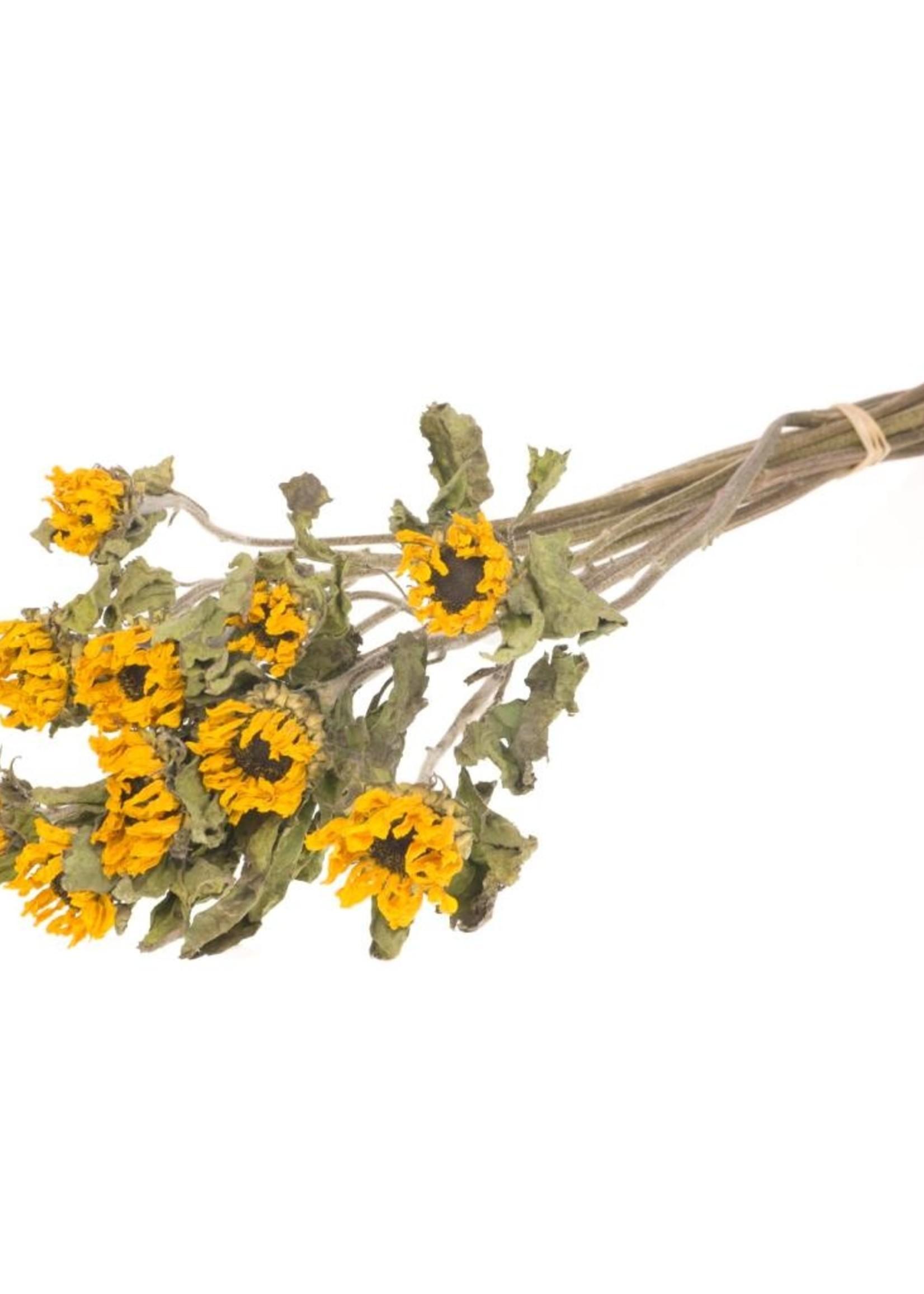 10 gedroogde zonnebloemen - 60 centimeter lang
