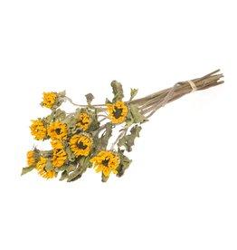 5 gedroogde zonnebloemen