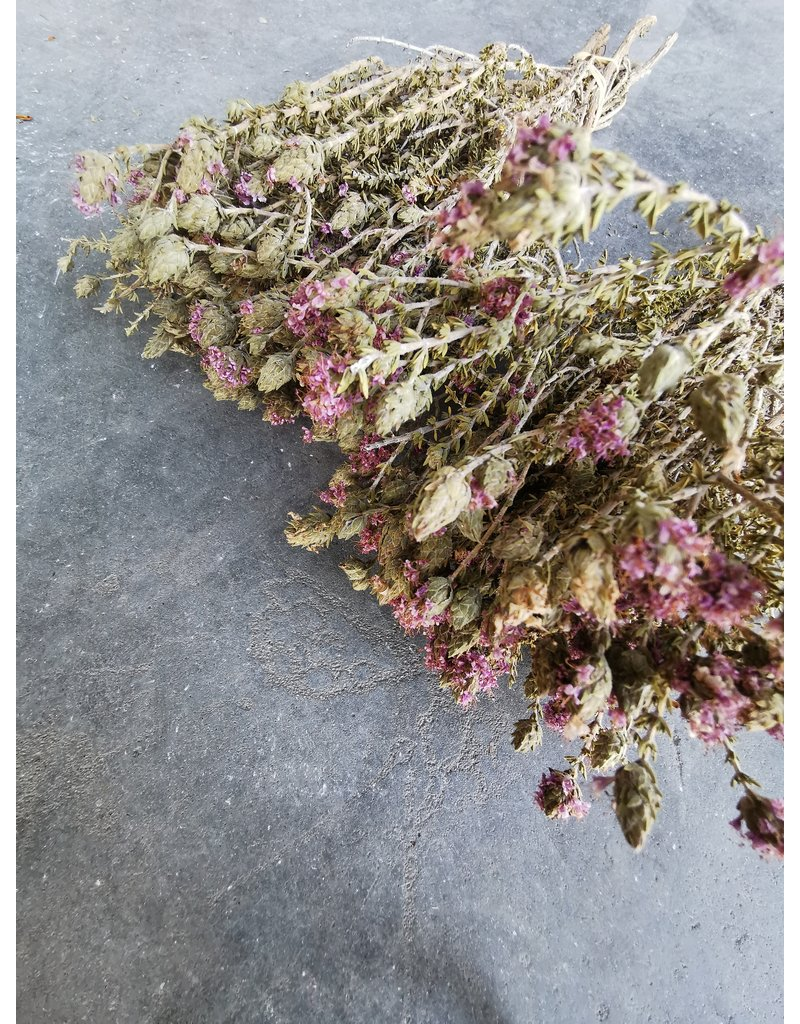 Dried Blooming Thyme