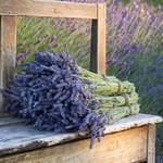 ANGEBOT - 2 Bündel Lavendel 100 Gramm pro Bündel