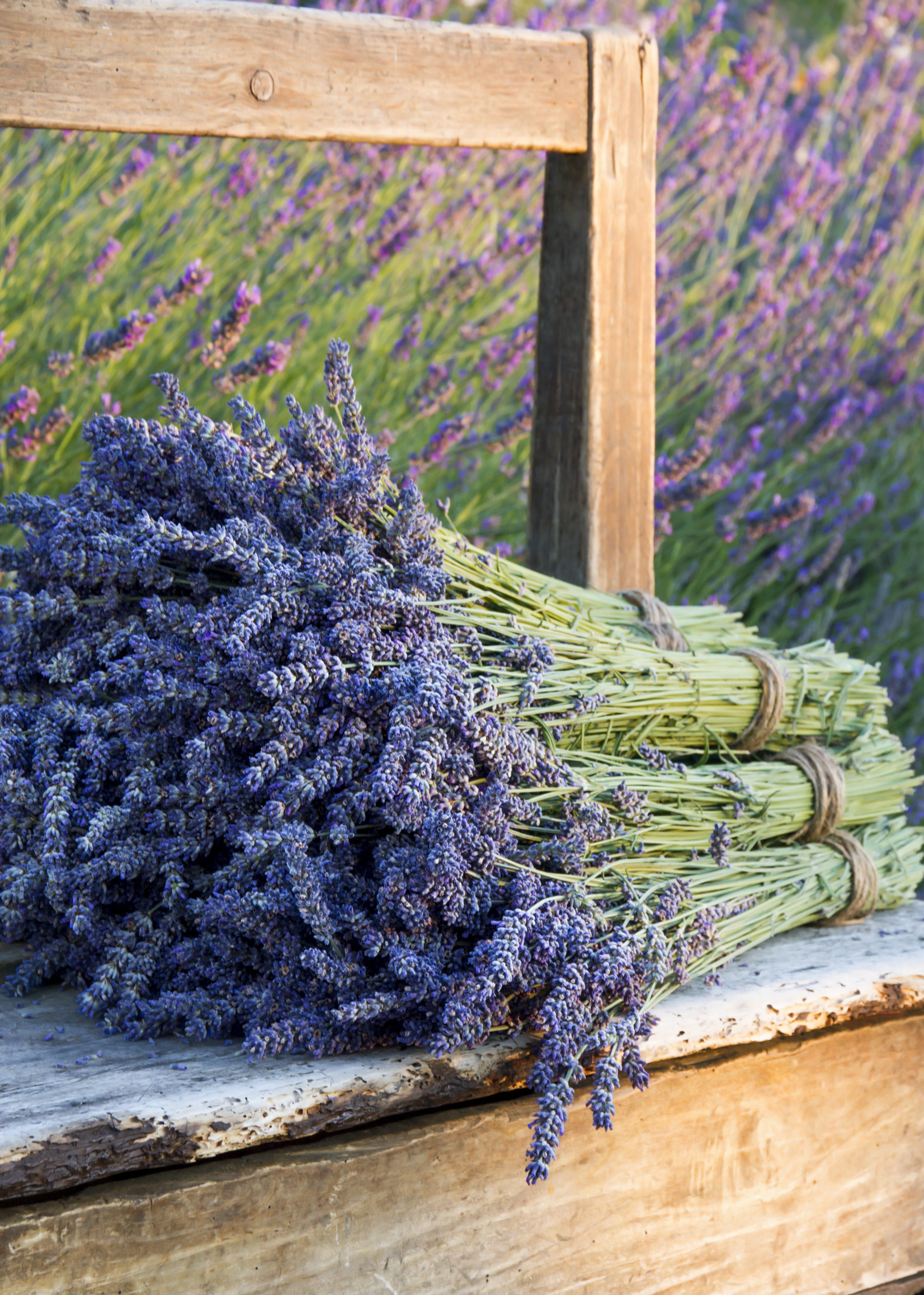 OFFER - 2 bunches of Lavender 100 grams per bunch
