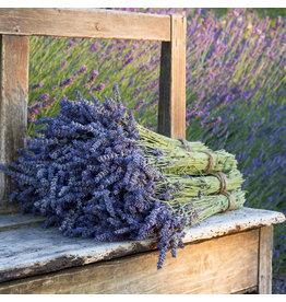 ANGEBOT - 2 Trauben Lavendel 100 Gramm pro Bund