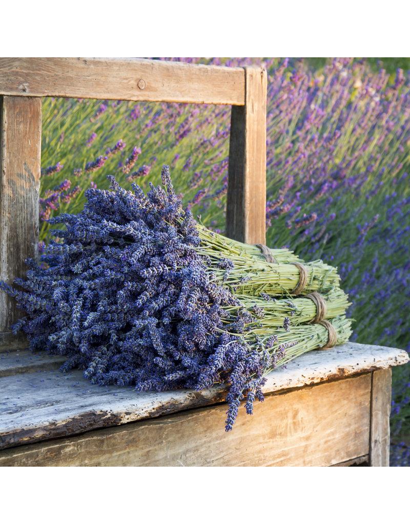 AANBIEDING - 2 bossen Lavendel 100 gram per bos