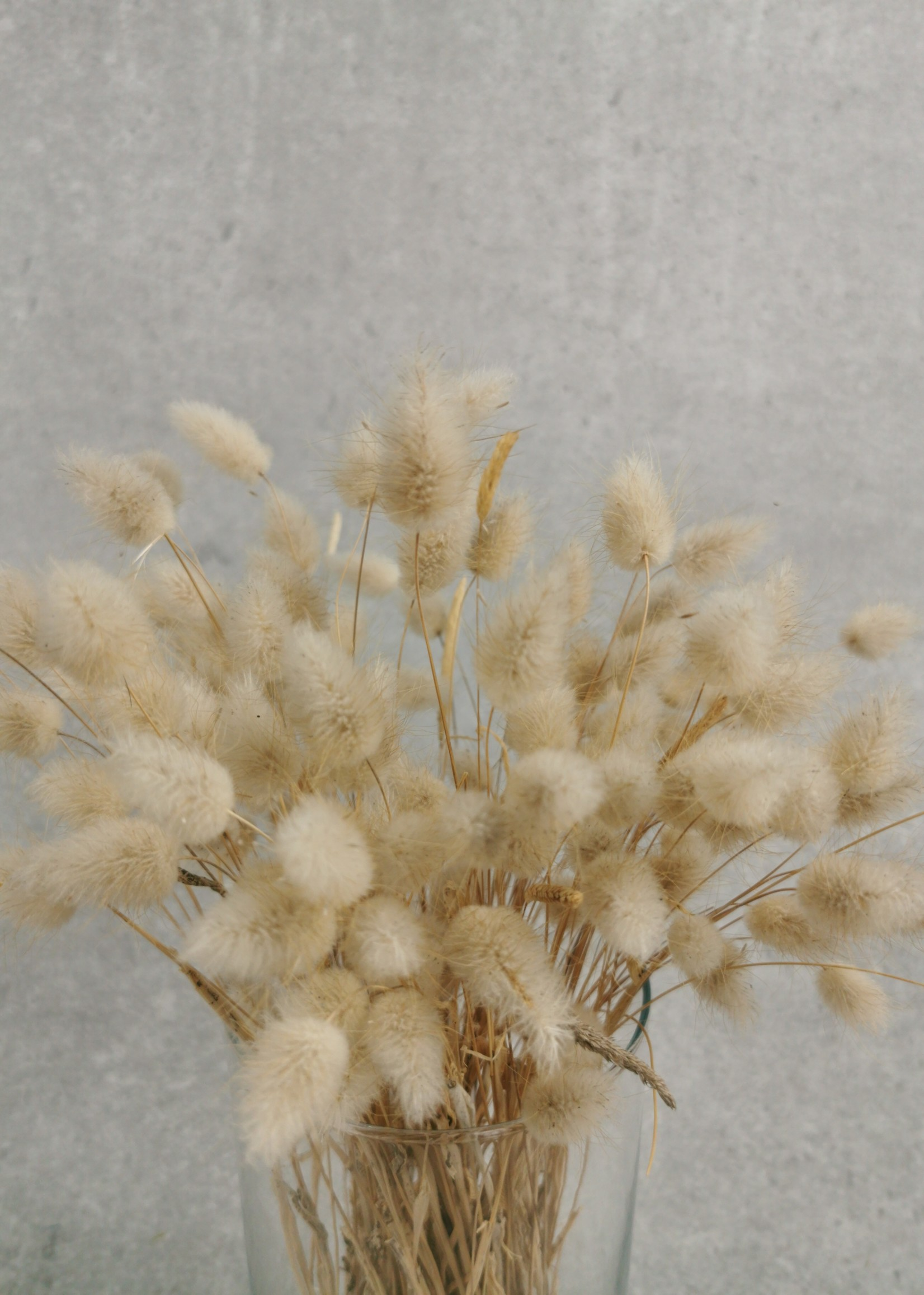 Solo Bouquet dried Baby Lagurus Natural