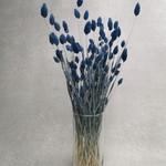 Phalaris dark blue