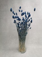 Phalaris dunkelblau
