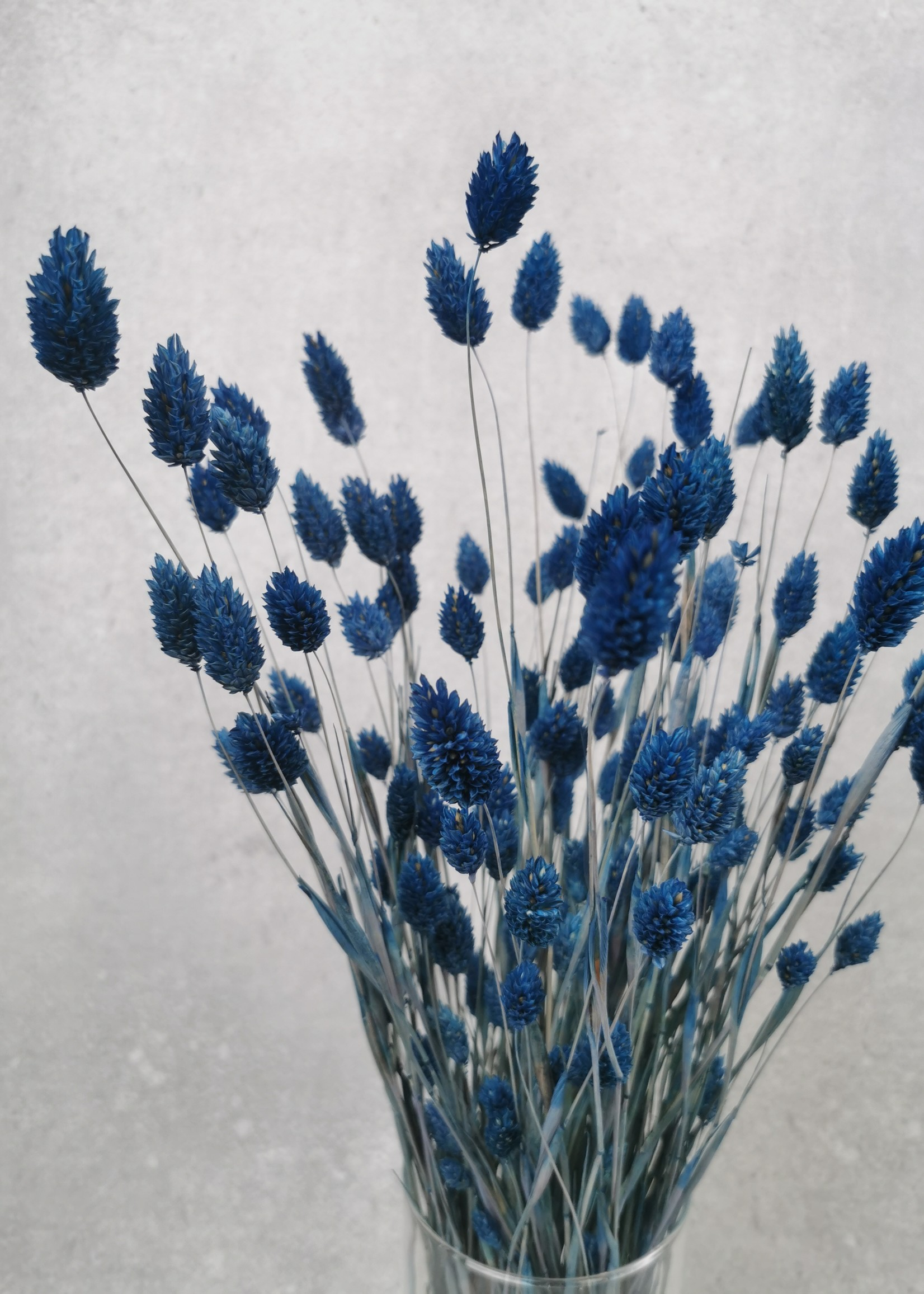 Solo bouquet  Phalaris dark blue