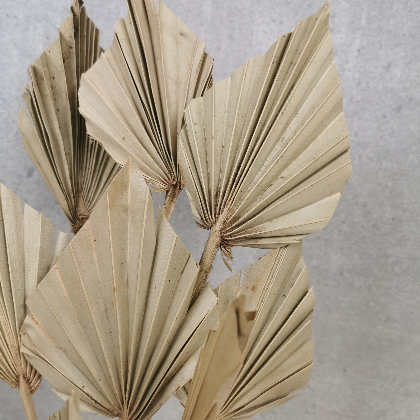 Solo bouquet of 10 stems Palm spear