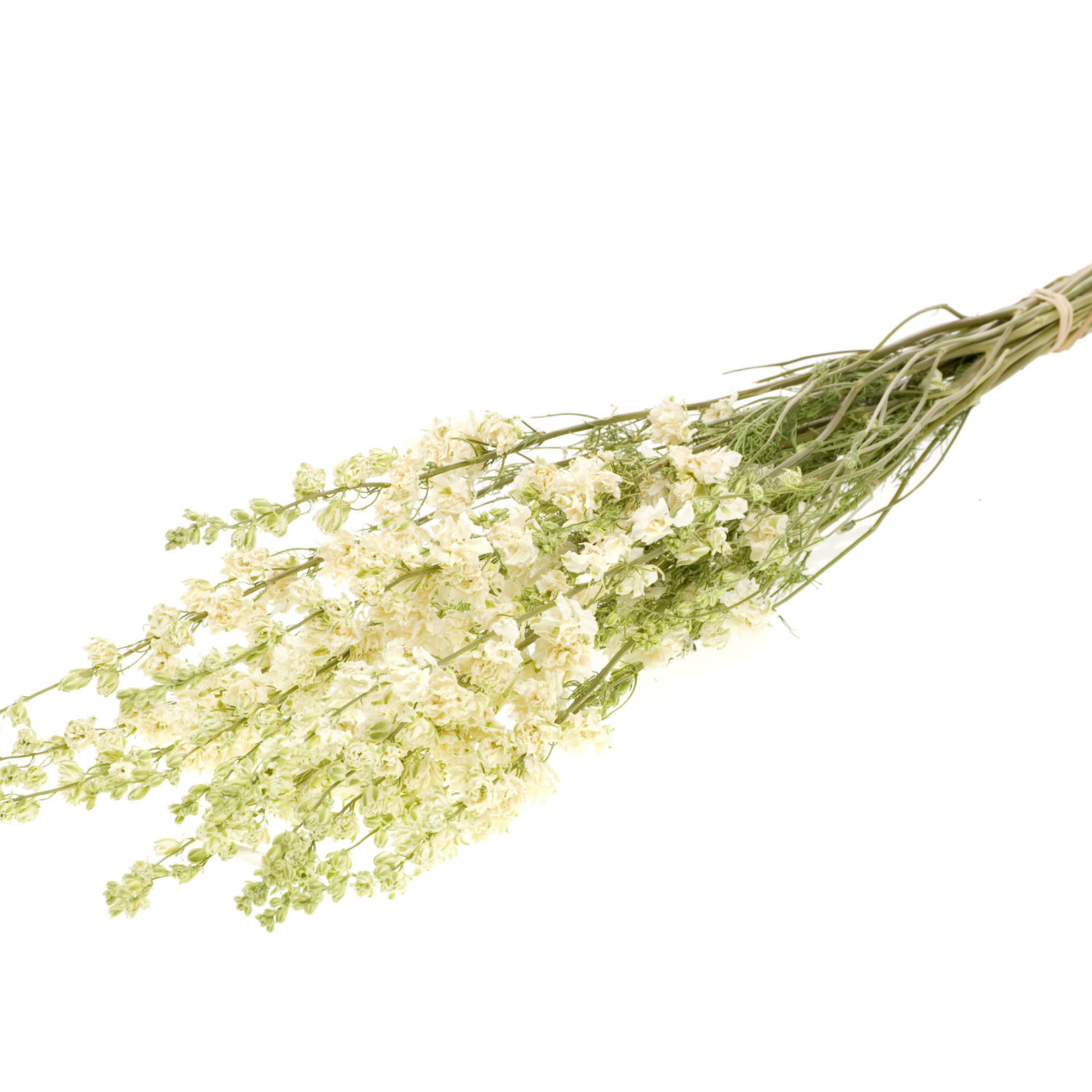 Gedroogde Ridderspoor - Delphinium - Wit - per bos