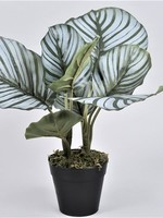 Kunstplant Calathea  ↥ 30 cm