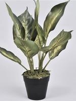 Artificial Dieffenbachia plant  ↥ 30 cm