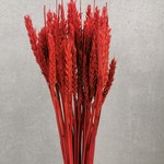 Solo bouquet dried red wheat