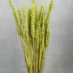 Wheat M20 Apple Green