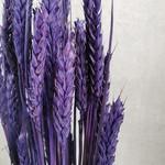 Wheat M32 Lundugo
