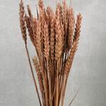 Wheat Hazelnut M12