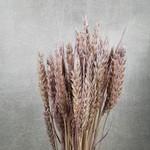 Tarwe Lavendel M31