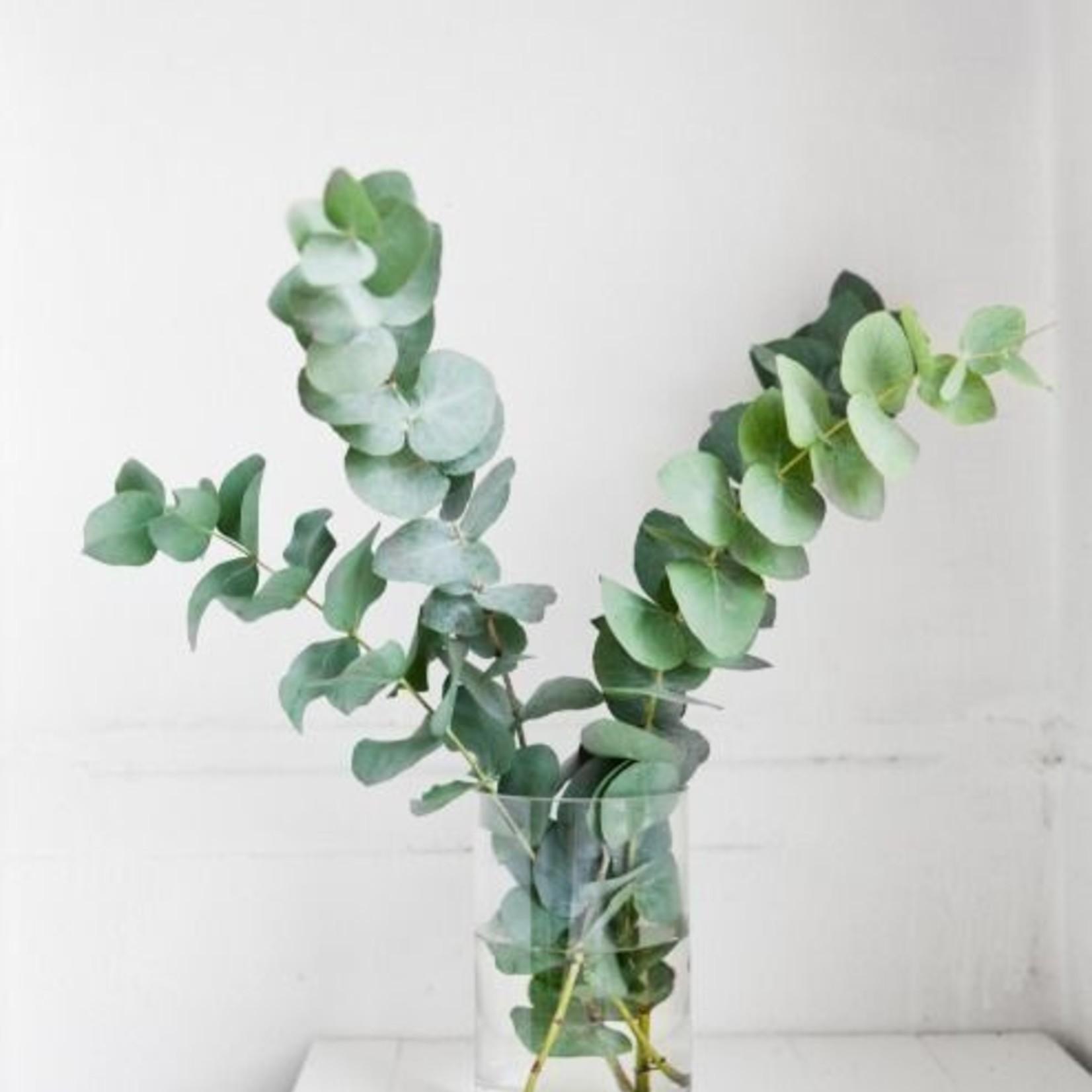 Three hundred grams of fresh green eucalyptus as Solo bouquet