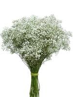 White Gypsum solo bouquet