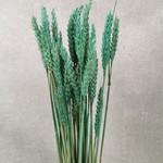 Wheat M27 Water Green