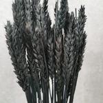 Wheat Black M37