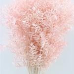 Ruscus light pink